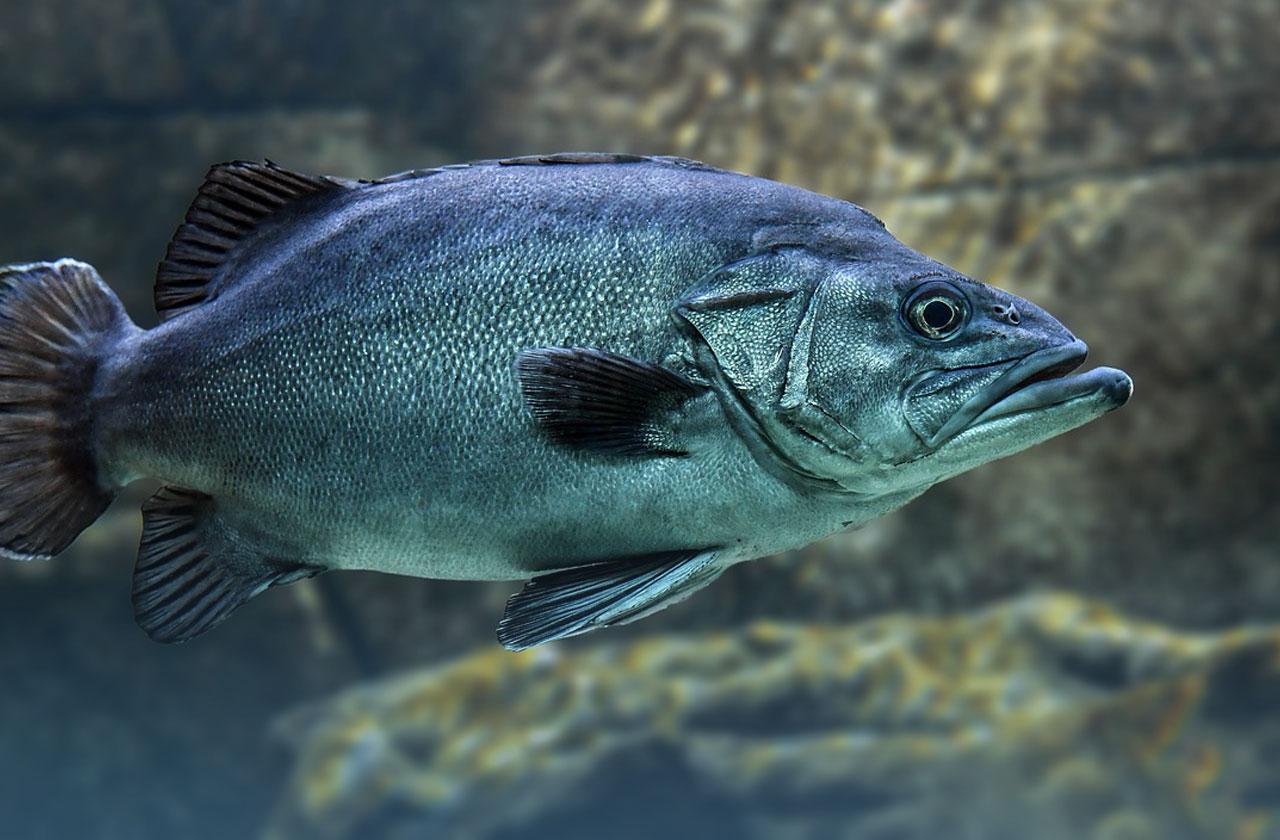 Kundenkommunikation - Der Fisch stinkt vom Kopf her